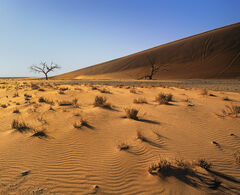 Caramel Dunes, Sossusvlei, Namibia, Africa, massive, Dune No. 45, morning, sunrise, skeletal, trees, shadows, rippled, s