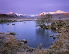 Colour Purple Rannoch