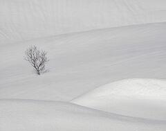 Deep Snow 11