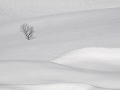 Deep Snow 12
