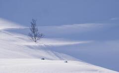 Deep Snow 15