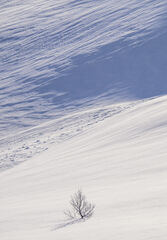 Deep Snow 9