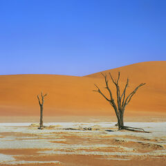 Dry Vlei, Dead Vlei, Sossusvlei, Namibia, Camel Thorn trees, salt pan, surreal, primary, colours, clear, blue, sky, oran