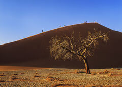 Dune 45 Dawn, Sossusvlei, Namibia, Africa, vast, red, sand dunes, blue skies, radiant, tree, sidelit, massive, scale, pe