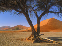 Dune 45, Sossusvlei, Namibia, Africa, sand dune, tourists, tree, person, scale, glowing, orange, blue, sky, wind, jet,