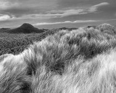 Dune Brush
