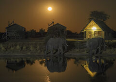 Elephant Moonrise, Elephant Sands, Botswana, Africa, elephant, exposure, waterhole, lodges, moon, perimeter, 3200 ISO