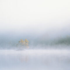 Emergence Loch Achilt, Loch Achilt, Contin, Scotland, chilly, still, stunning, morning, boil, mist, vague, island, birch