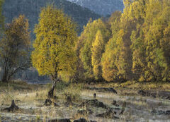 Golden Copse Affric