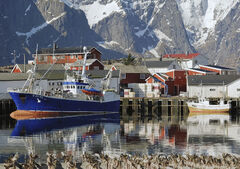Hamnoy Harbour Reflections