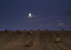Harvest Moon Moray