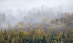 Hill Mist Pano