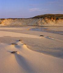 Hosta Sandscape 1