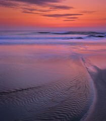 Hosta Sunset