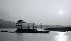 Island In The Sun Mono