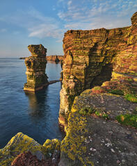 Golden sunlight shortly after sunrise paints the cliffs and nearby vertical rock stack in a rainbow of colours near the cliff top at Duncansby Head, Caithness.