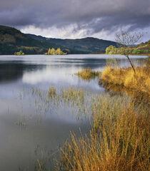 Loch Chon Gold