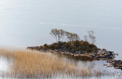 Island and reed beds in Loch Lurgainn at the base of Stac Pollaidh captured with a slow shutter speed for artistic effect.