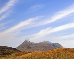 Lone Tree Quinag, Loch Assynt, Assynt, Scotland, birch, tree, autumn, bracken, zebra crossing, sky, striped, peak, smoke