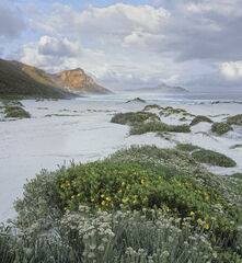 Misty Cliffs Scarborough, Scarborough, South Africa, Africa, southern coast, cape Town, Chapmans Peak, mist, cliffs, flo