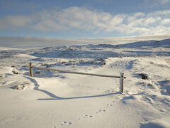 No Through Road Dava, Dava Moor, Moray, Scotland, gate, posts, track, foot prints, arctic hare, summit, bleak, expansive, unblemished, snow, golden, sunlight, blue