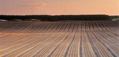 Plough lines Roseisle