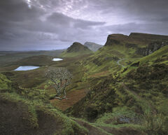 Precarious Footing, Quiraing, Skye, Scotland, iconic, view, overhanging, tree, cliff, sombre, mood, brooding, clouds, gl