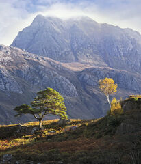 Pride of Place, Loch Maree, Torridon, Scotland, trees, perspective, mountain, Slioch, golden, birch, scots pine, slope