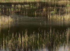 An abstract pattern out of a reed bed and wind shear near Duartmore Bridge at Kylesku