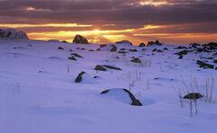 Snow Desert Flakstad