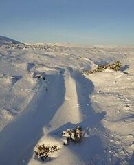 Snow Dunes Dava Moor, Dava Moor, Moray, Scotland, desert, white, cream, yellow, blue, velvet, sculpted, wind, sunlight, shapes, beguiling