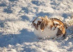 Snow Dusted Fudge