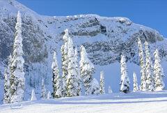 Snow Shroud Fernie