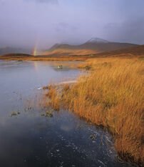 Stainge Rainbow