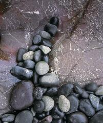 Stone Barb