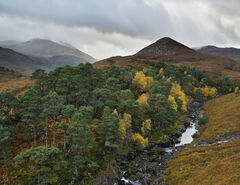 Strathfarrar Gorge, Strathfarrar, Highlands, Scotland, glen, scenery, majestic, mountain, views, river, gorge, wooded, b