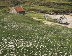 Talmine Machair, Talmine, Sutherland, Scotland, bay, Tongue, wreck, bothy, abandoned, rusting, decaying, flowering, mach