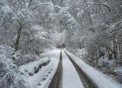 White Web Glen Affric