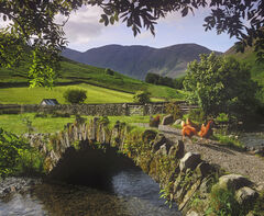 a cluck of chickens crosses an old stone bridge near the pub at the end of Wastwater in the Lake District on a summer afternoon