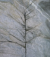 Winter Birch Slate