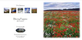 Blazing Poppies - Seasons