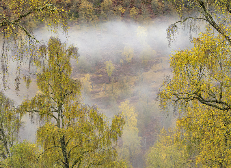 A Mist Rolls In, Glen Affric, Highlands, Scotland, band, mist, atmospheric, autumnal, golden, birch, valley, wafted, den photo