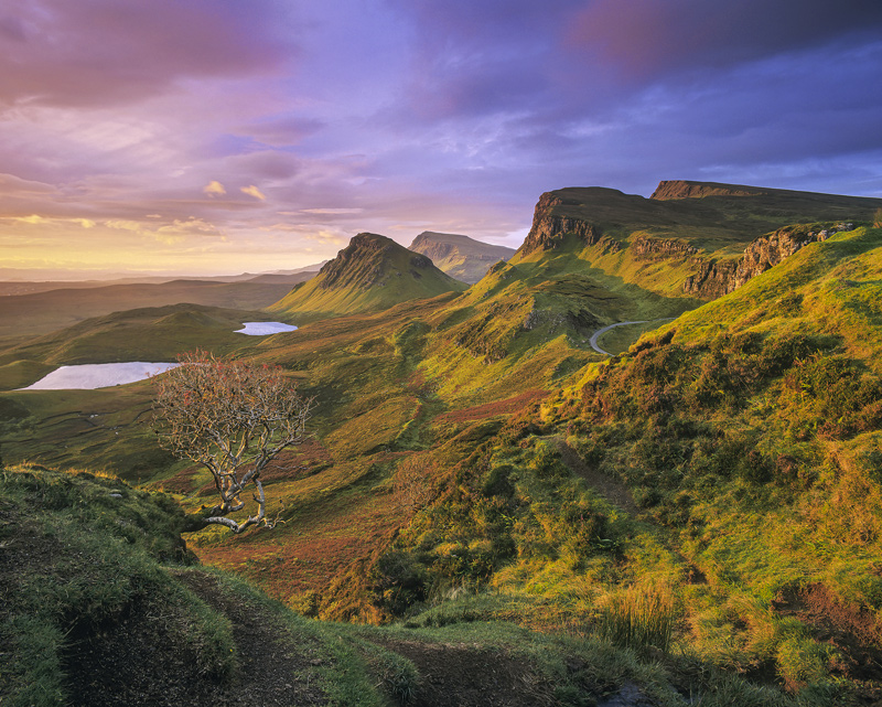 Apricot Quiraing, Quiraing, Skye, Scotland, magnificent, Rowan, red, berries, light, clouds, tree, festooned, Eden, icon photo