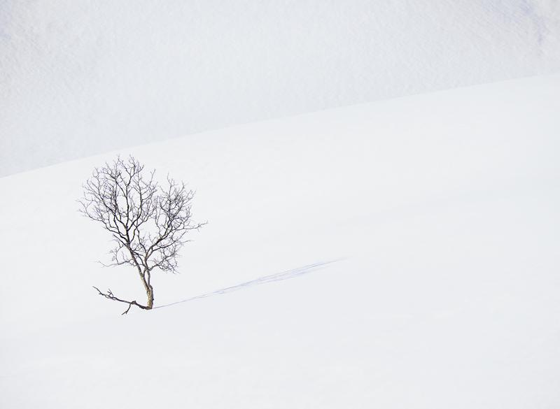 Art Of Snow 1, Anderdalen Nat Park, Senja, Norway, national Park, plateau, mountainous, snow, winter, birch, trees, wind photo