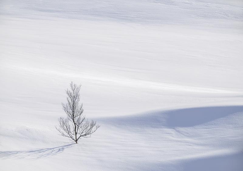 Art Of Snow 2, Anderdalen Nat Park, Senja, Norway, trees, birch, mountainous, National park, plateau, purity, hillocks,  photo