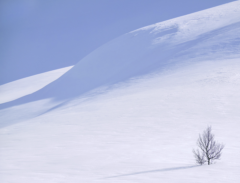 Art Of Snow 3, Anderdalen Nat Park, Senja, Norway, high, mountainous, plateau, snow, white, purity, birch, trees, hilloc photo