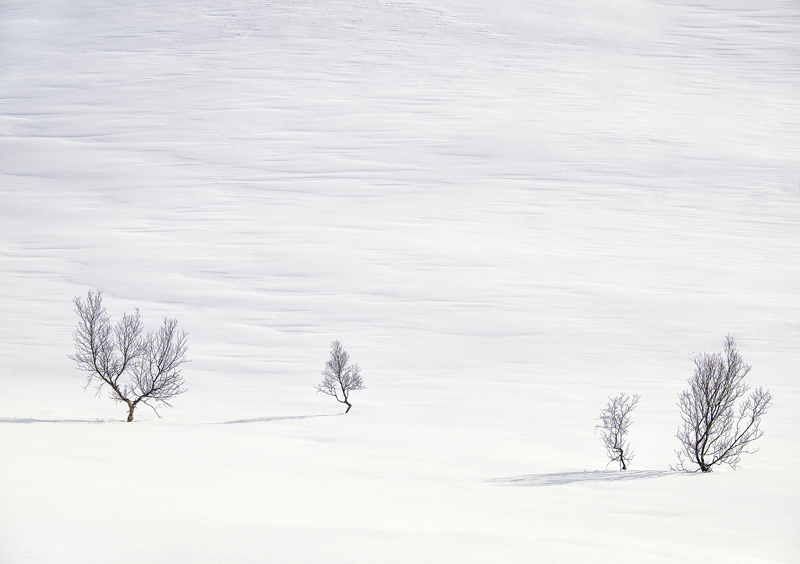 Art Of Snow 5, Anderdalen Nat Park, Senja, Norway, high key, mountainous, plateau, winter, purity, birch, trees, purity, photo
