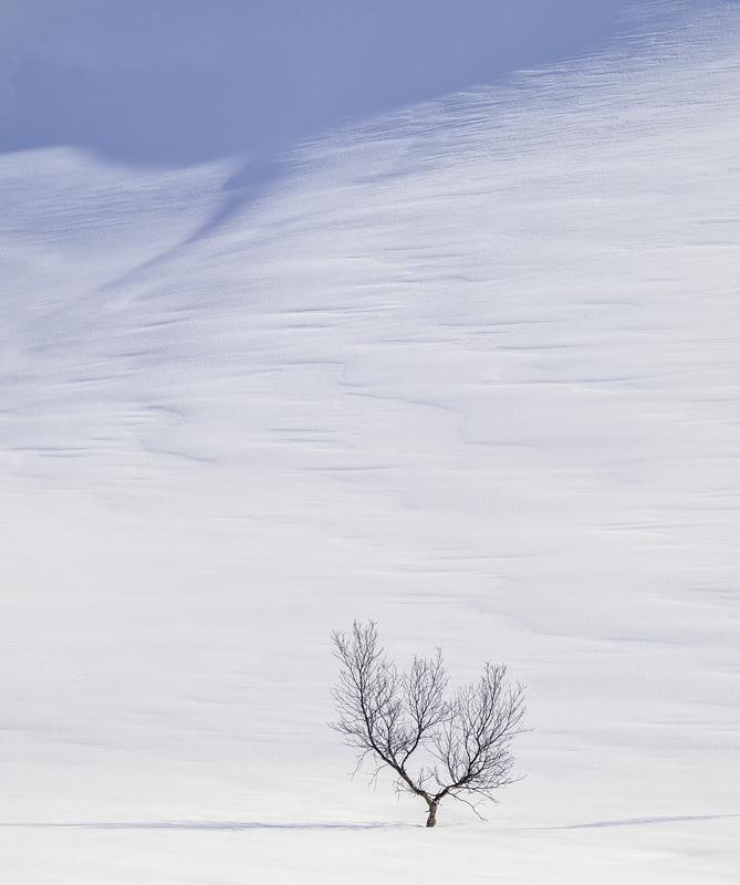 Art Of Snow 6, Anderdalen Nat Park, Senja, Norway, plateau, mountainous, purity, spurious, purity, blue, shadows, photo