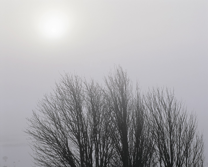 Birch Brushed Light, Rannoch Moor, Glencoe, Scotland, powerful, simplistic, atmosphere, mist, birch, trees, delicate   photo