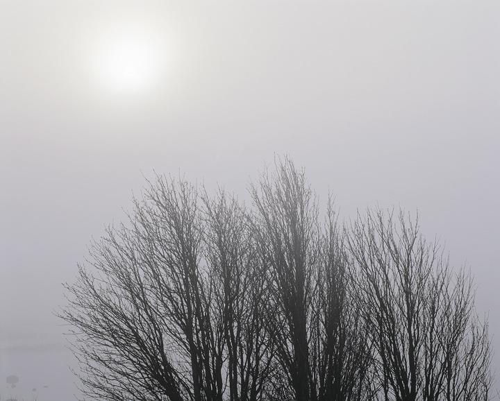 Birch Brushed Light, Rannoch Moor, Glencoe, Scotland, powerful, simplistic, atmosphere, mist, birch, trees, delicate   photo